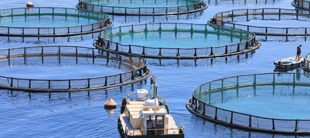 Aquaculture farming tour