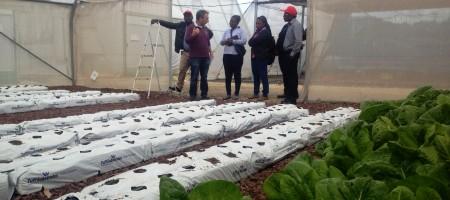 Greenhouses tour