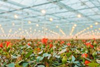 Israeli-agriculture-blooms-like-a-rose-Agritech-Israel