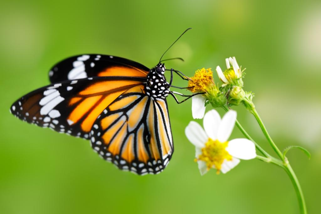 tiger-butterfly-nanotechnology-research-Eye-implants-for-glaucoma-Biomed